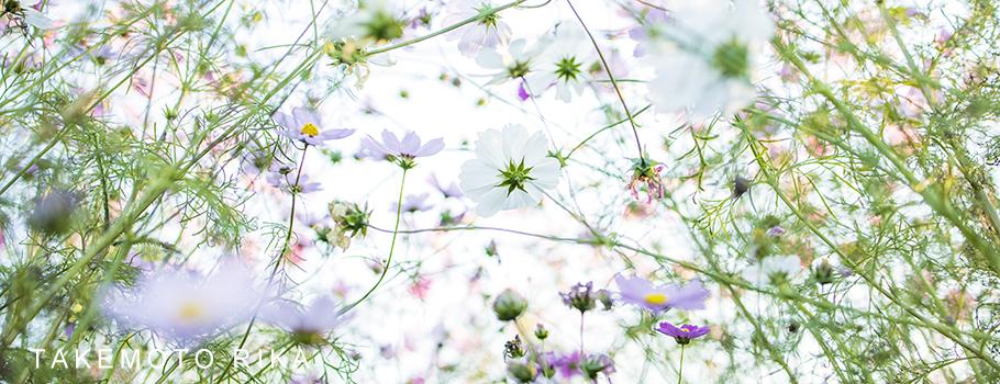 風景写真家 竹本りか Landscape photographer RIKA TAKEMOTO