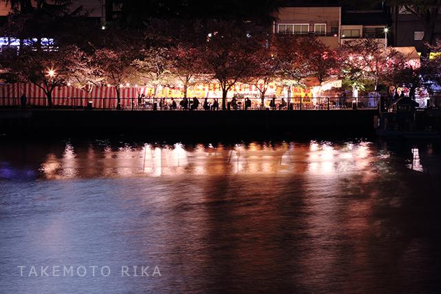 大川沿い 桜