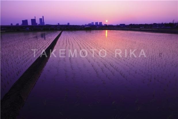 見沼田んぼの夕景