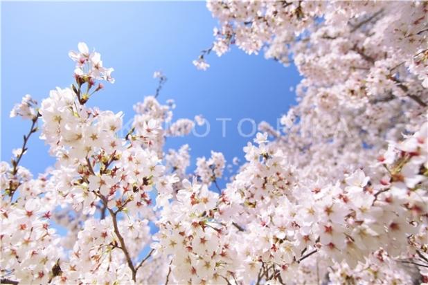 spring_003
