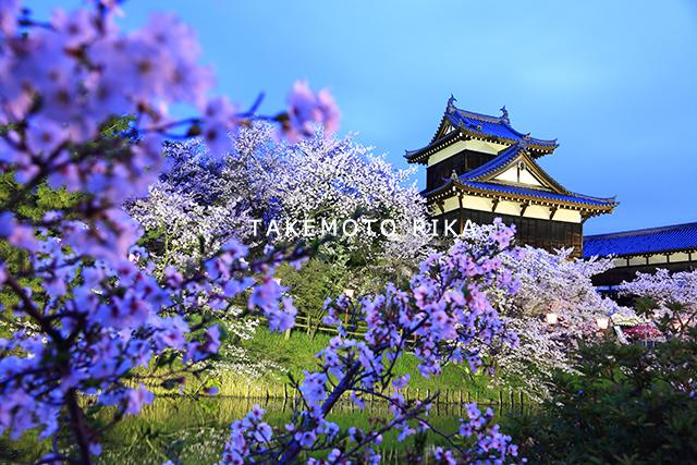 郡山城跡 桜